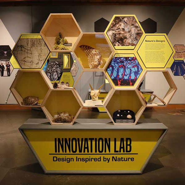 BiomimicrySQ